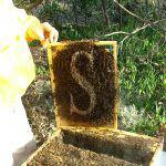 #Sicilia. Miele e parassiti, l'Apicoltura siciliana è al sicuro