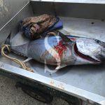 #Sciacca. Sequestrato un esemplare di tonno rosso pescato illegalmente