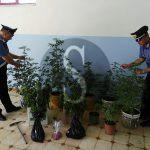 #Cronaca. Coltivava droga in casa a Santa Lucia del Mela, convalidato l'arresto