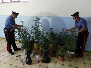 Droga_piante_Carabinieri