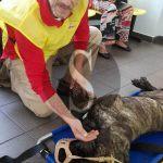 """#Messina. Ambulanza veterinaria, i volontari: """"Non abbiamo paura"""""""