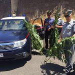 #Cronaca. Coltivava la droga in casa, un arresto a Santa Lucia del Mela