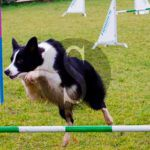 #Messina. Agility dog, forse un'area attrezzata a Villa Dante