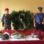 #Cronaca. Coltivava marijuana in casa, denunciato pluripregiudicato messinese