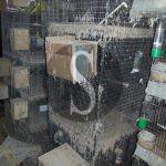 #Trapani. Sequestrato allevamento di uccelli in un garage