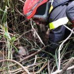 #Castroreale. I Vigili del Fuoco salvano cane caduto in un dirupo