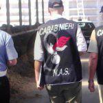 #Nebrodi. Il NAS passa a tappeto macelli e aziende zootecniche