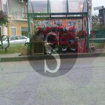 #Milazzo. Pensilina dei bus trasformata in un negozio di fiori