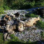 #Milazzo. Strage di cani a San Filippo del Mela