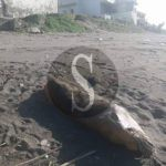 #Barcellona. Carcassa di un delfino ritrovata sulla spiaggia