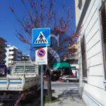 #Messina. La denuncia dei Verdi: abbattuti alberi in piena fioritura in viale Europa