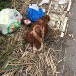 #Barcellona. Discarica abusiva e carcasse di animali sul ponte Idria