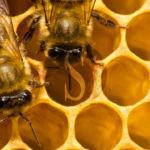 #Agricoltura. Cresce l'interesse per l'apicoltura in Sicilia