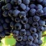#Sicilia. Via libera ai vini Grillo e Nero d'Avola nelle Doc