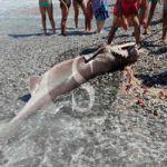 #Attualità. Grosso esemplare di pesce vacca pescato nelle acque di Calderà