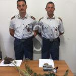 #Cronaca. Coltivano cannabis a Lipari, denunciate due persone