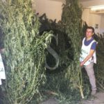 #Cronaca. Coltiva marijuana a Carini, 43enne arrestato