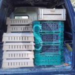 Cronaca. Furnari, bloccato furgone che trasportava 900 uccelli