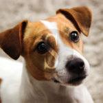 Ambiente. A Marina di Ragusa una nuova area attrezzata per i cani