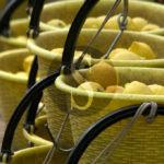 Enogastronomia. Il limone di Siracusa protagonista della Domenica del gusto
