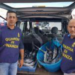 Cronaca. Pesca illegale a Catania, sequestrati 185 chili di pescespada