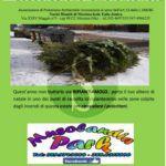 Ambiente. Recupero degli alberi di Natale con l'associazione Fare Verde