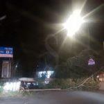 Cronaca. Tragedia sfiorata a Monforte Marina: albero cade per il vento, automobilista salvo per miracolo