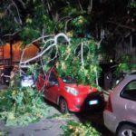 Cronaca. Tragedia sfiorata a Messina, via XXIV Maggio: albero si schianta su auto