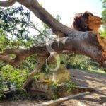 Cronaca. Tragedia sfiorata a Messina: a Villa Dante un grosso ramo crolla su un'auto