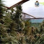 Cronaca. Trovati con 120 chili di marijuana, arrestati due fratelli a Siracusa