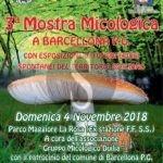 Attualità. Barcellona PG, dal 12 al 16 novembre corso per il tesserino per la raccolta dei funghi