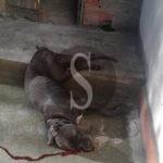 Cronaca. Barcellona PG, cane barbaramente ucciso nella zona di Portosalvo. Indaga la Polizia