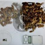 Cronaca. Barcellona PG, la Polizia arresta giovane per droga