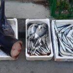 Lotta all'abusivismo, Annona e Guardia di Finanza sequestrano oltre 30 chili di pesce