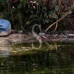 Acque bianche contaminate del residence Il Giardino sui Laghi finiscono nel lago di Ganzirri
