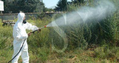 Messinaservizi, interventi estate 2020: è guerra a ratti, pulci, zecche e alla famigerata zanzara tigre